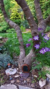 Fairy garden at the base of the chaste tree, Clematis 'Vericose Violacea',  Sedum 'Vera Jameson'