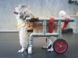 image credit dog wheelchair malaysia