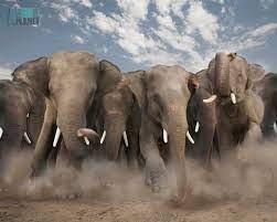 73+] Elephants Wallpaper on WallpaperSafari
