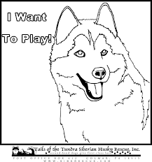 Small Picture Epic Husky Coloring Pages 65 On Coloring Print with Husky Coloring