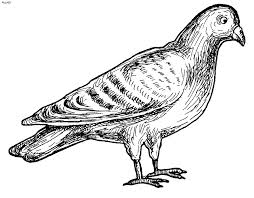 Small Picture Pigeon Coloring Page Kids Website For Parents