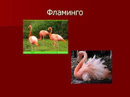 Красная книга животных и растений Назад