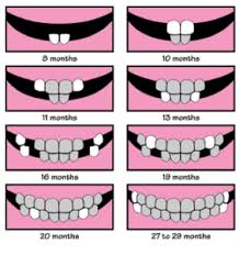 When Do Babies Cut Teeth Chart Pin By Alecia Mango On For Baby Tooth Chart Baby
