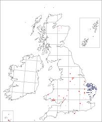 Verbascum pulverulentum | Online Atlas of the British and Irish Flora