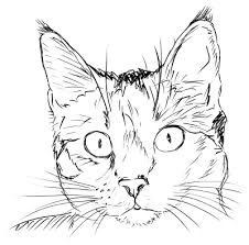 cat face drawing.  Cat Black Cat Face Clipart  Suggest And Drawing N