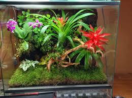 Come fare un terrario tropicale 9 passi uncome