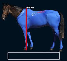 Horse Size Comparison Chart Equine Size Chart