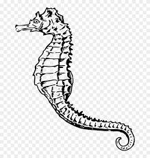 seahorse clipart black and white. Pin Seahorse Clipart Black And White Sea Horse Clip Art To