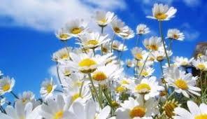 Risultati immagini per primavera