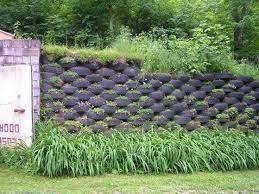 tire retaining wall amazing gardens