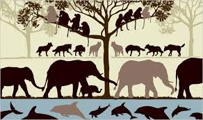 Image result for Dominance hierarchy