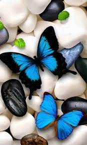 Blue Butterfly Wallpaper For Pc ...