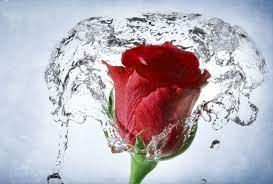 water-so-beautiful-free-hd-wallpaper