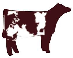show heifer silhouette. Contemporary Show Show Heifer Clip Art  Shorthorn Heifer Vector Graphic Cow Vector Vector  Art Silhouette On Show