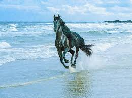 black horse running in water photo 1