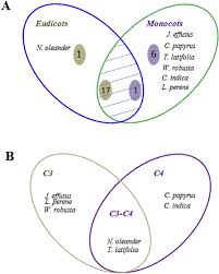 Venn Diagram Plants Venn Diagram Depicting Selected Eudicots And Monocots And C3 C4