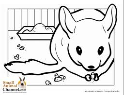 Small Picture Baby Chinchilla Coloring PagesChinchillaPrintable Coloring Pages