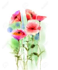 stock photo watercolor red poppy flowers painting flower paint in soft color and blur style isolated red poppies on white background