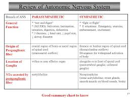 Anatomy And Physiology Autonomic Nervous System Ppt Video