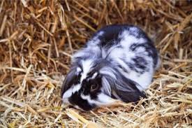 what kind of bedding do rabbits need