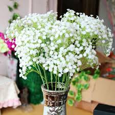 gypsophila gypsophila flower romantic white gypsophila paniculata seeds beautiful starry seeds plant for home garden