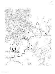 Panda Bear Color Page For Kids