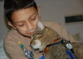 Αποτέλεσμα εικόνας για cat therapy