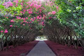 dallas arboretum and botanical garden blog
