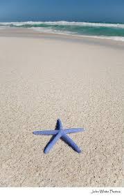best starfish images starfish ocean life and stars blue starfish