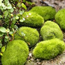 Decorative Moss Balls 100 PcsBag Moss Seeds Moss Ball Sagina Subulata Seeds Outdoor 42