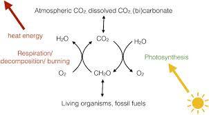 photosynthesis essays in biochemistry  figure · open in new tab · powerpoint figure 1 the global carbon cycle