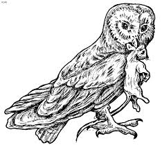 Small Picture barn owl coloring page wwwmindsandvinescom