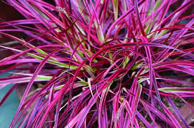 top 10 container foliage plants fountain grass
