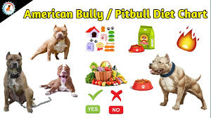 Pitbull Dog Years Chart American Bully Pitbull Diet Chart Dog Diet Food At Mix