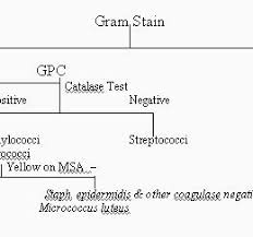 Microbiology Unknown Test Flow Chart Pin By Sa On Micro 169443736044 Bacteria Test Flow Chart
