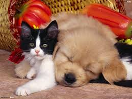 kittens and puppies wallpaper. Interesting Puppies In Kittens And Puppies Wallpaper D