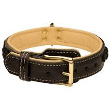walking padded leather dog collar with strong brass plated buckle