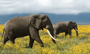 essay on elephant in english for children and kids