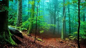 1920x1080 hd wallpapers nature forest hd images 3 hd wallpapers hdes