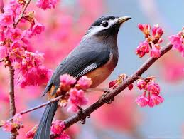 most beautiful wallpapers for facebook.  Beautiful Most Beautiful Birds Pictures And Wallpapers To Share On Facebook   Desktop Background For U