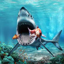 great white shark attack. Perfect Attack Great White Shark Attack Sim Inside T