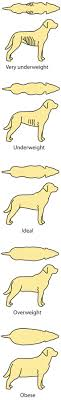 All About Dog Food Feeding Guide
