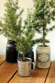 Tiny plantings in mugs and ceramic jars would look festive on the kitchen  counter.