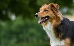 Wellness Core Puppy Feeding Chart Core Dry Formula Adult All Breed Original Turkey