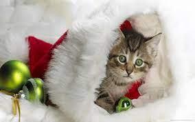Christmas Kitten In Santa's Hat HD ...