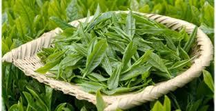 fresh tea leaves. Unique Fresh Tea Leavesjpg Inside Fresh Tea Leaves