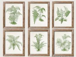 ferns wall art botanical antique fern prints set of 6 authentic lovable 2 on wall art set of 6 with ferns wall art botanical antique fern prints set of 6 authentic