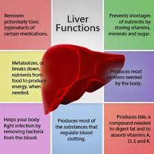 A Chart Shows The Functions Of The Liver Liver Detox