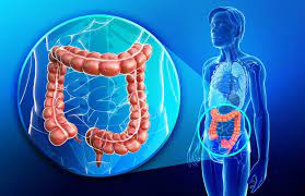 Absorbing useful substances into the body and restricting the entry of harmful substances. Colon Large Intestine Facts Function Diseases Live Science