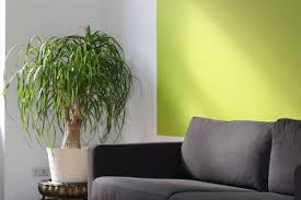 Feng shui home elements plants Water The Spruce How To Use Feng Shui Shapes And Elements In Home Decor